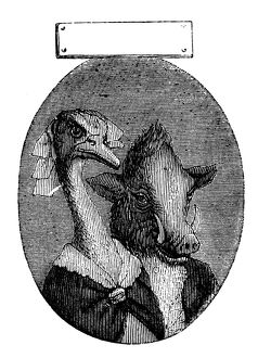 Humanized animals illustrations: Portrait of boar and ostrich