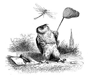 Humanized animals illustrations: Owl catching dragonfly