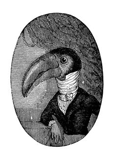 Humanized animals illustrations: Portrait of toucan