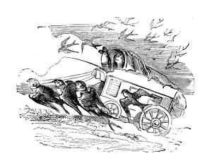Humanized animals illustrations: Swallow carriage