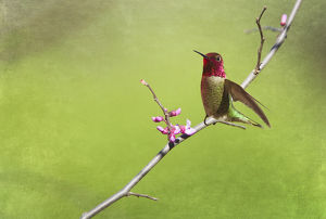Hummingbird with spring blossoms