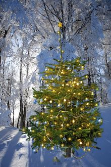Illuminated Christmas tree in winter forest