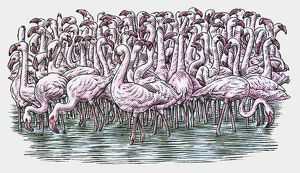 Illustration of Flamingos standing in water
