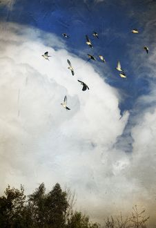 Incoming storm and flock of birds