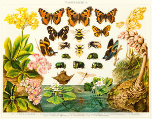 Insects butterflies lithograph 1895