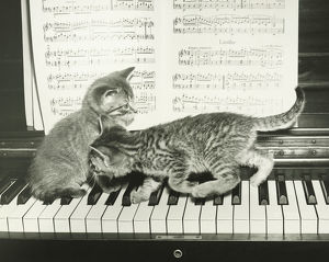 Two kitten playing on piano keyboard, (B&W)