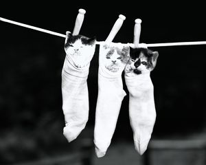 Three kittens in socks