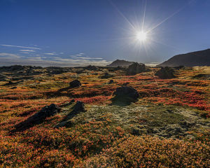 Lava and moss in the autumn, Western Iceland