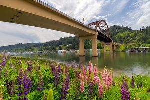 Lupine Bloomingby Sauvie Island Bridge