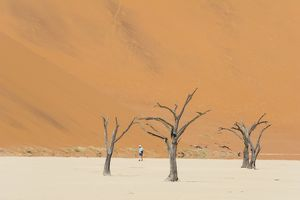 One man walking in the Deadvlei salt pan with a giant dune in the backdrop. Sossuvlei