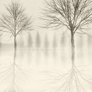 Monochrome image of winter trees reflected in flooded fields