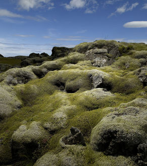 Moss covered volcanic lava field