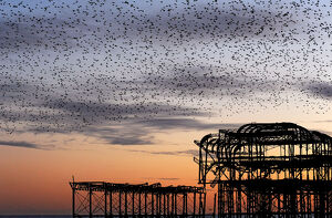 Murmuration over the ruins of Brighton's West Pier