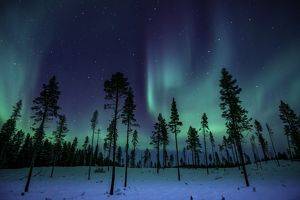 Northern Lights in the Trees