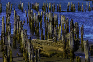 Pier posts In Decay