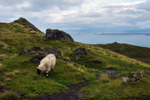 travel/photographer collections tonnaja travel photography/sheep mountain view isle skye the old man storr
