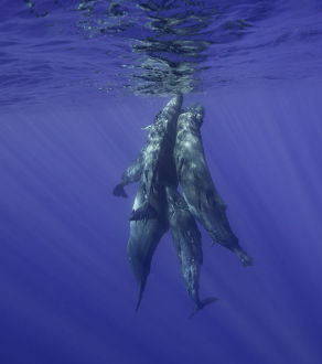 <b>Sperm Whales</b><br>Selection of 9 items