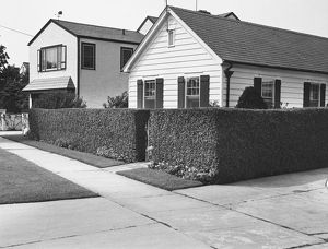 Two suburb houses with hedge, (B&W)