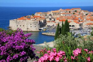 travel/destinations croatia dubrovnik/view old town walled city dubrovnik unesco world