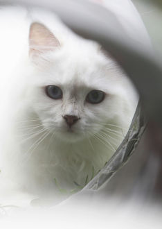 White cat in front of a tube