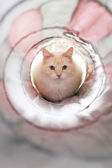 White cat in front of a tunnel
