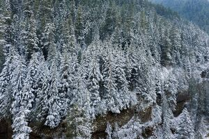 Winter Scene on Eagle Creek Hiking Trail